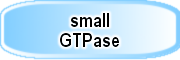 small_GTPase